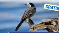 Le Plan d'eau du Canada est aussi un espace apprécié pour des oiseaux à identifier Proposé par la LPO à partir de 5 ans/ samedi 8 août / en continu […]